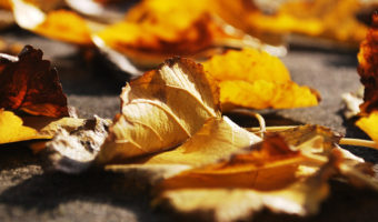 5 Awesome, Autumnal Videos Students Can Fall in Love With